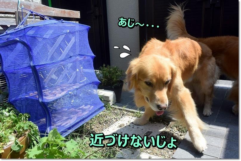 DSC_6917あじ~