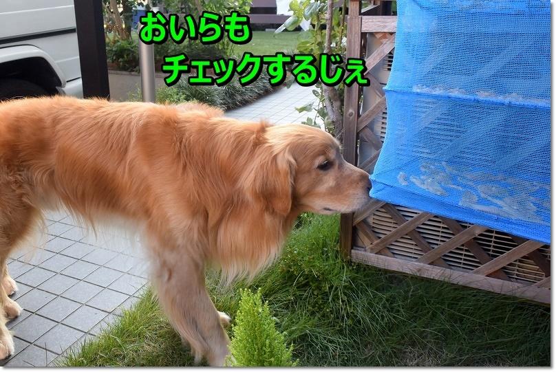 DSC_6966ふむふむ