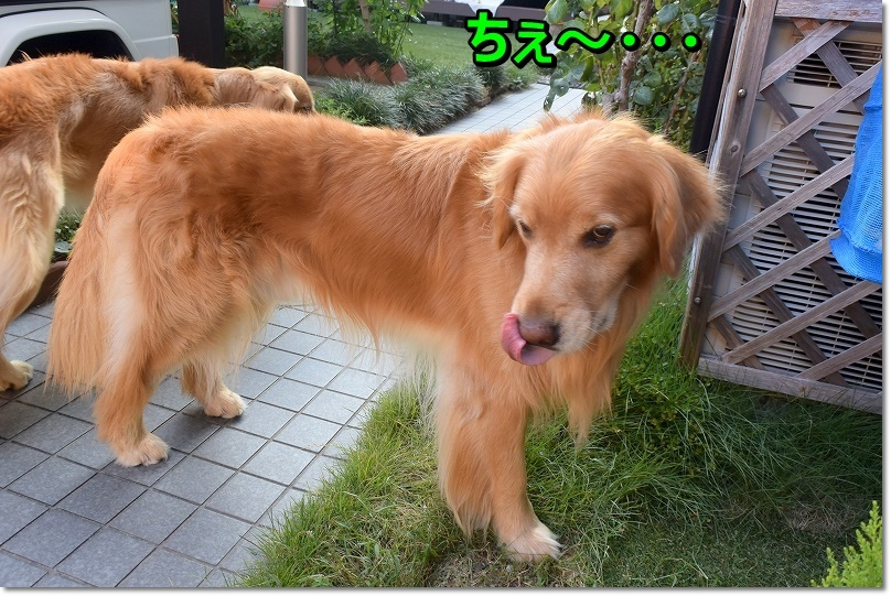 DSC_6969ちぇ~