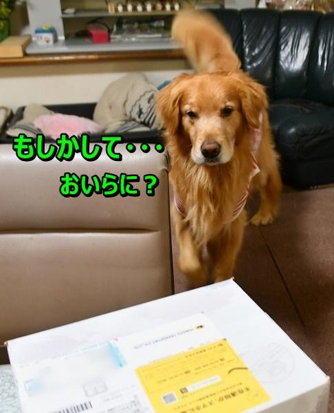 DSC_6953_20190718204729b80.jpg