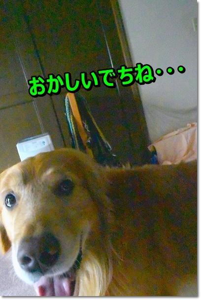 DSC_7033_201909012111281b1.jpg