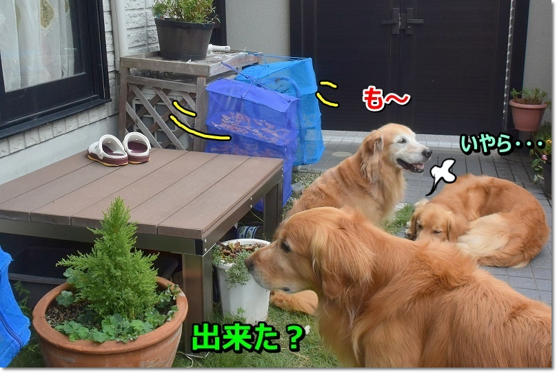 DSC_7040_20190901211138b43.jpg