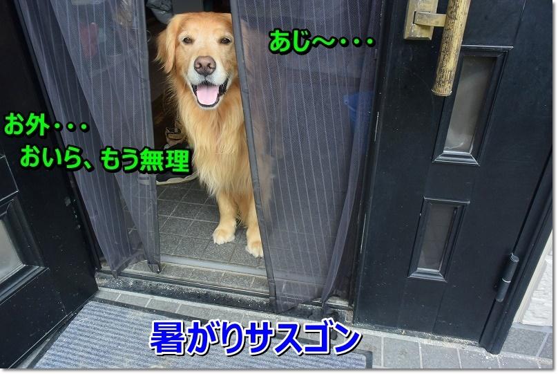 DSC_7048_20190901211149082.jpg