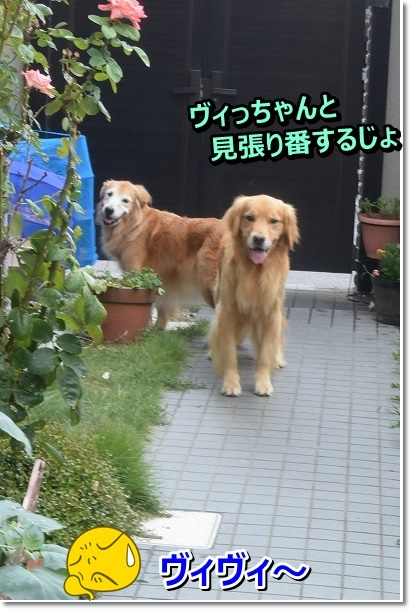 DSC_7049_20190901211150fec.jpg