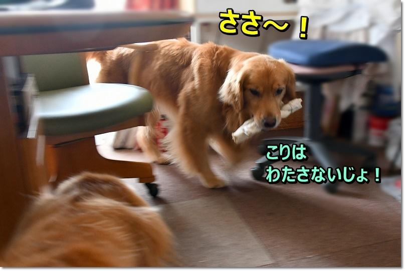 DSC_7752.jpg