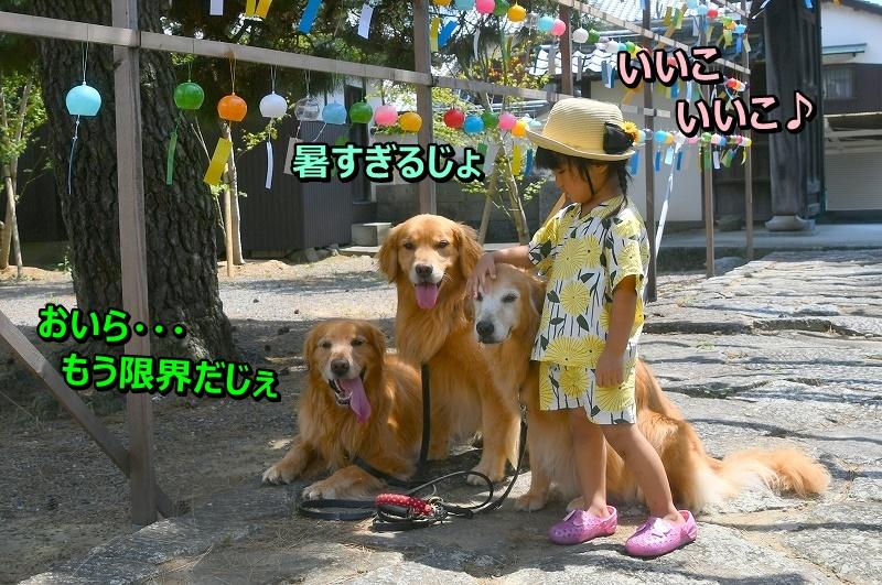 DSC_8212_20190822171301a36.jpg