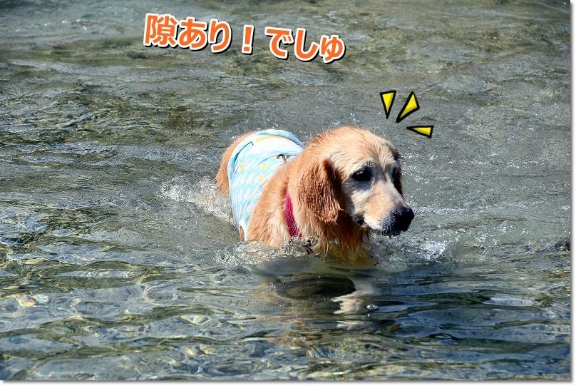 DSC_8659sukiari.jpg