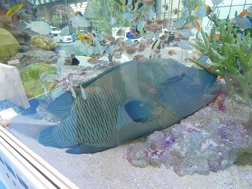 2-1 - 海水魚