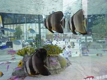 2-3 - 海水魚