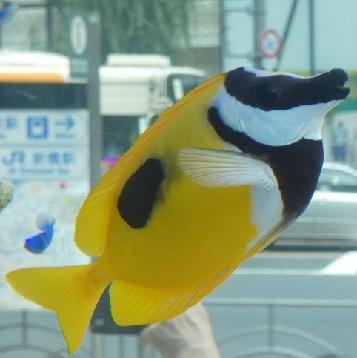 11-1 海水魚