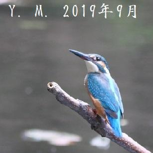 1-3の9月2日アップ 鶴ヶ島の公園1