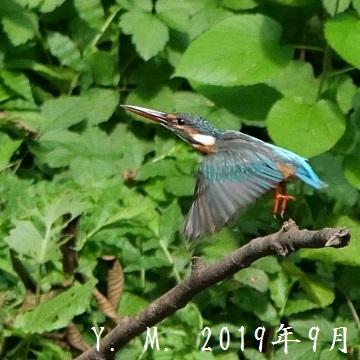 1-6の2019年9月2日アップ 鶴ヶ島の公園4