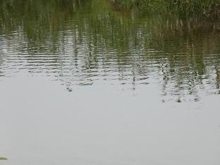 3-2見沼代用水水面