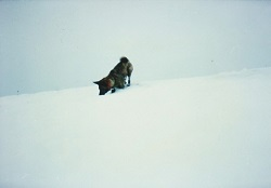 雪の中のムッチャン
