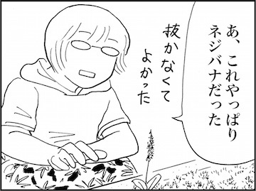 kfc01638-5