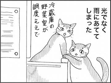 kfc01757-8