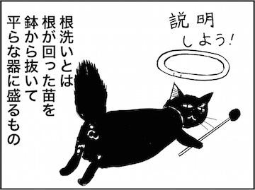 kfc01771-7.jpg