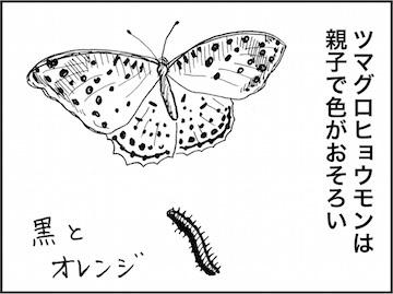 kfc01774-7.jpg
