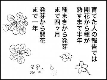 kfc01823-6.jpg