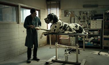 犬を愛する男