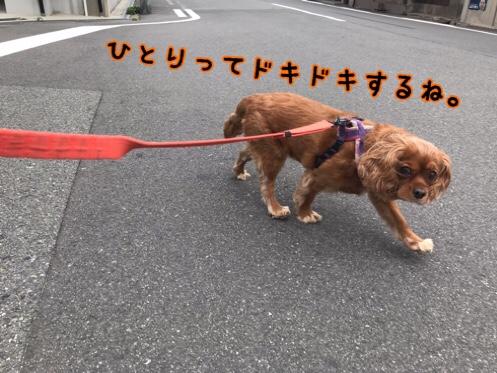 fc2blog_20190626154621c2c.jpg