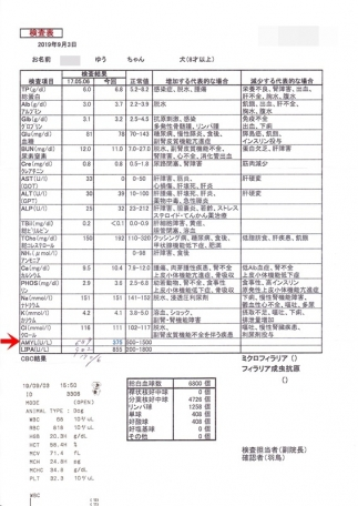 ゆう血液検査(20190903)