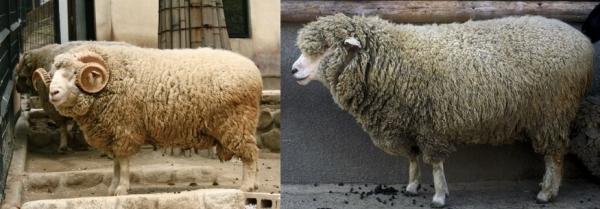 多胡碑の羊動物説について3