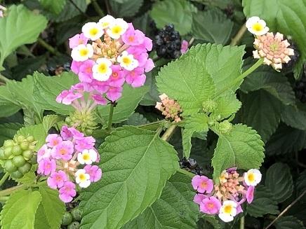 7202019 Flowers S