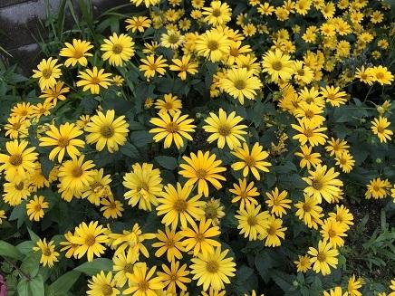 7202019 Flowers S2