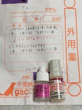IMG_5365 1