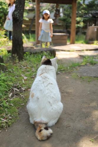 猫ちゃんがいる
