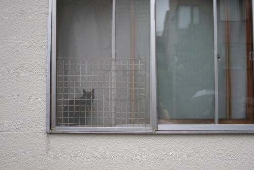 窓辺の黒猫