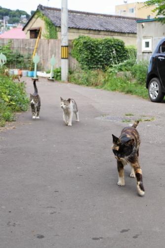猫がわらわら