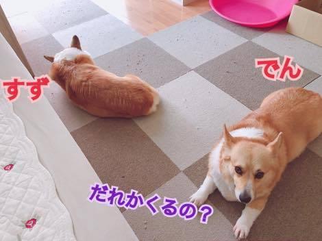 th_IMG_0116.jpg