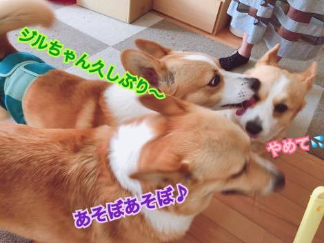 th_IMG_0119.jpg