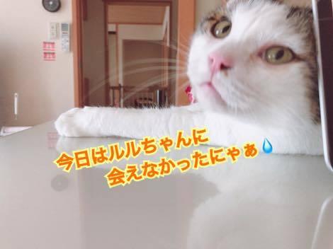 th_IMG_9889.jpg