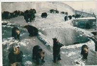 クマ牧場IMG_20191215_0001 (640x436)