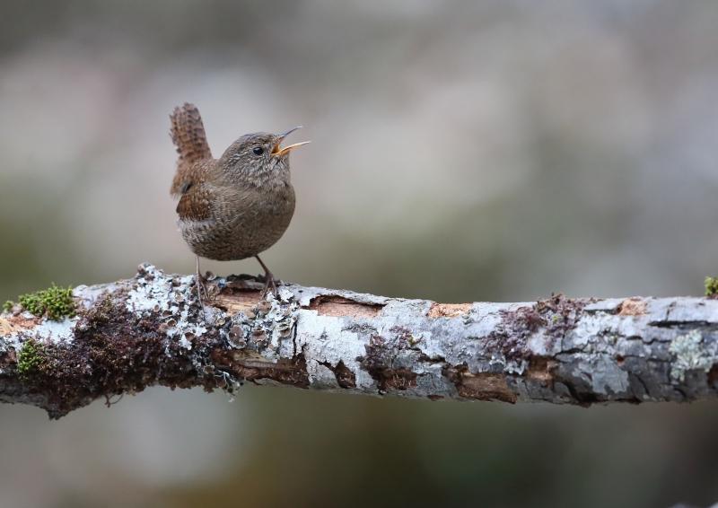 峠の小鳥⑥