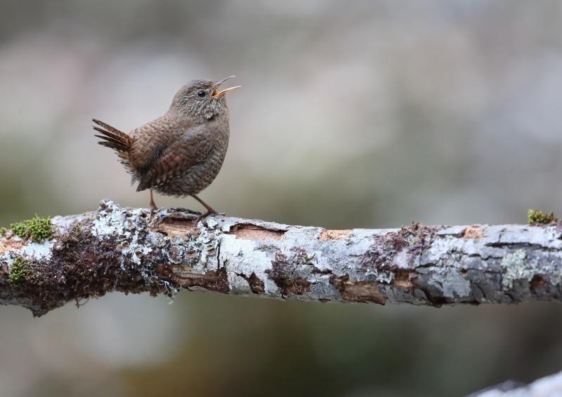 峠の小鳥⑦