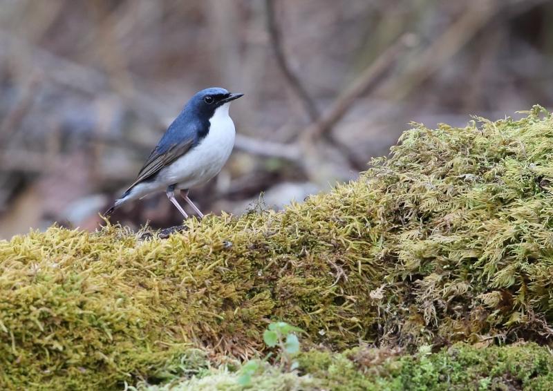 峠の小鳥⑨