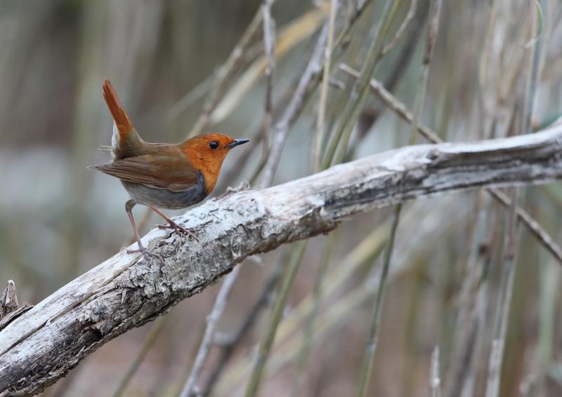 峠の小鳥⑩