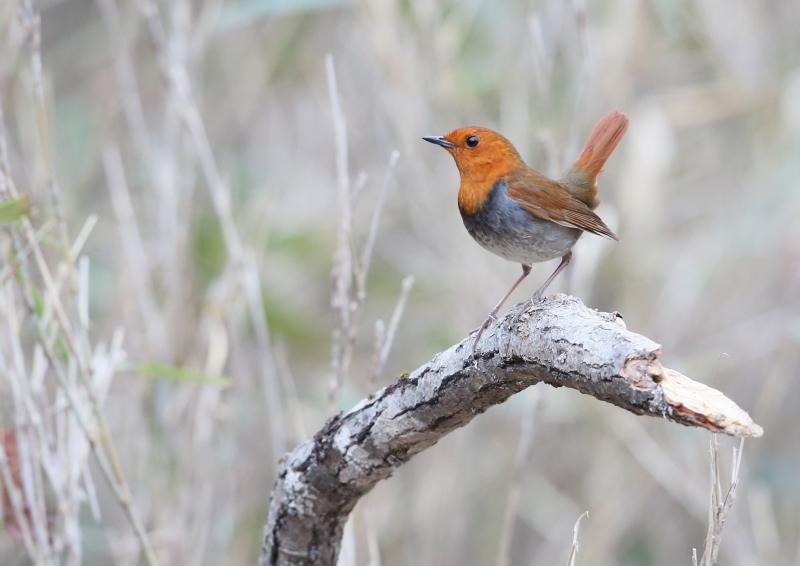 峠の小鳥⑪