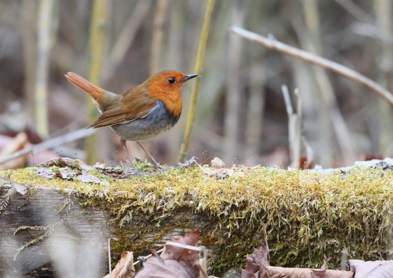 峠の小鳥⑫