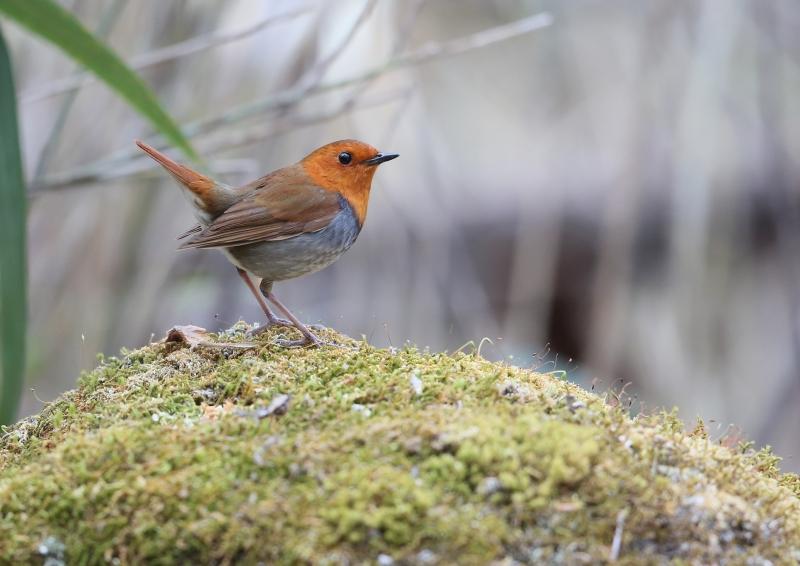 峠の小鳥⑬