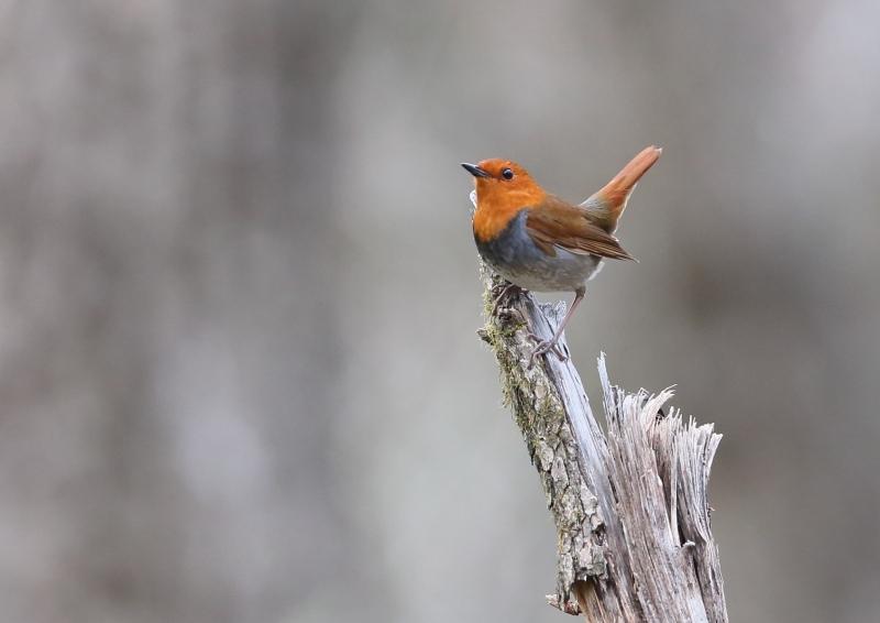 峠の小鳥⑭