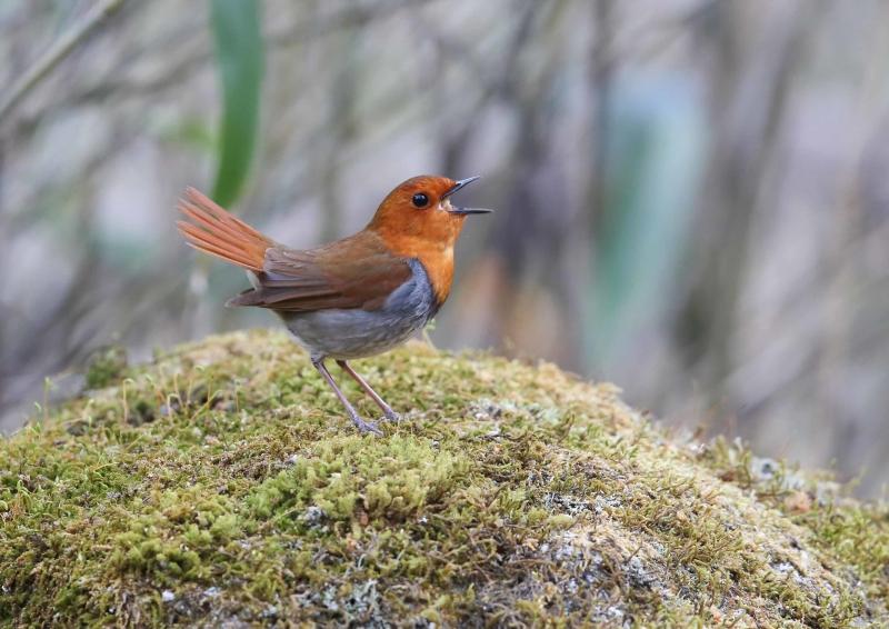 峠の小鳥⑮