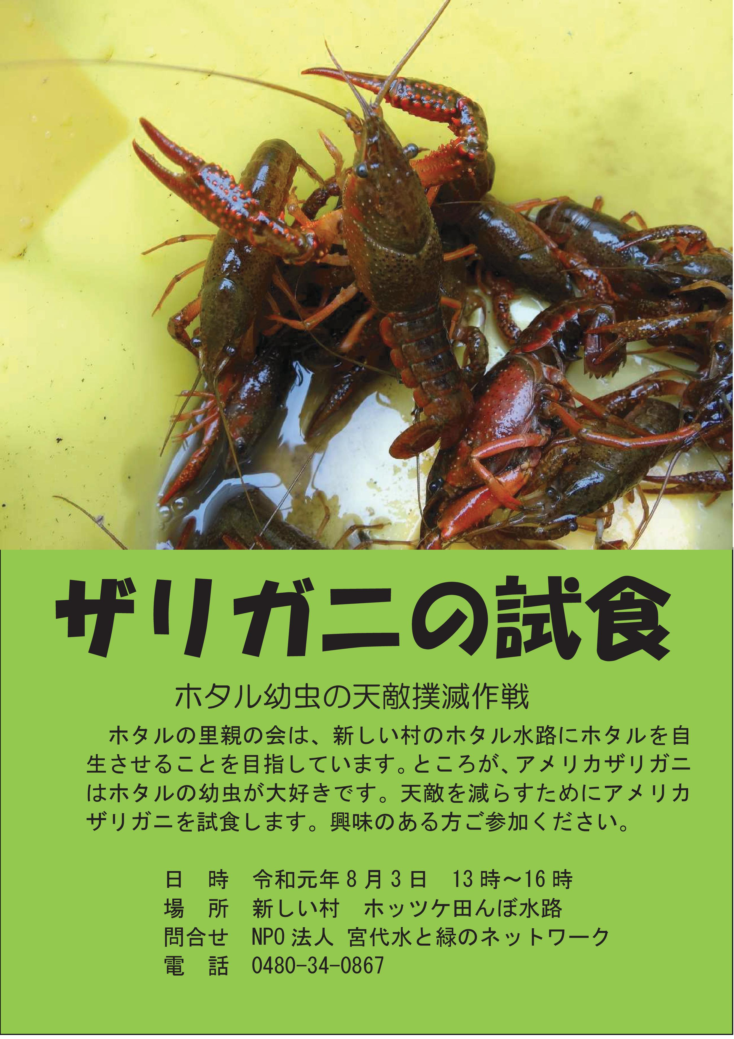 ザリガニの試食(2)