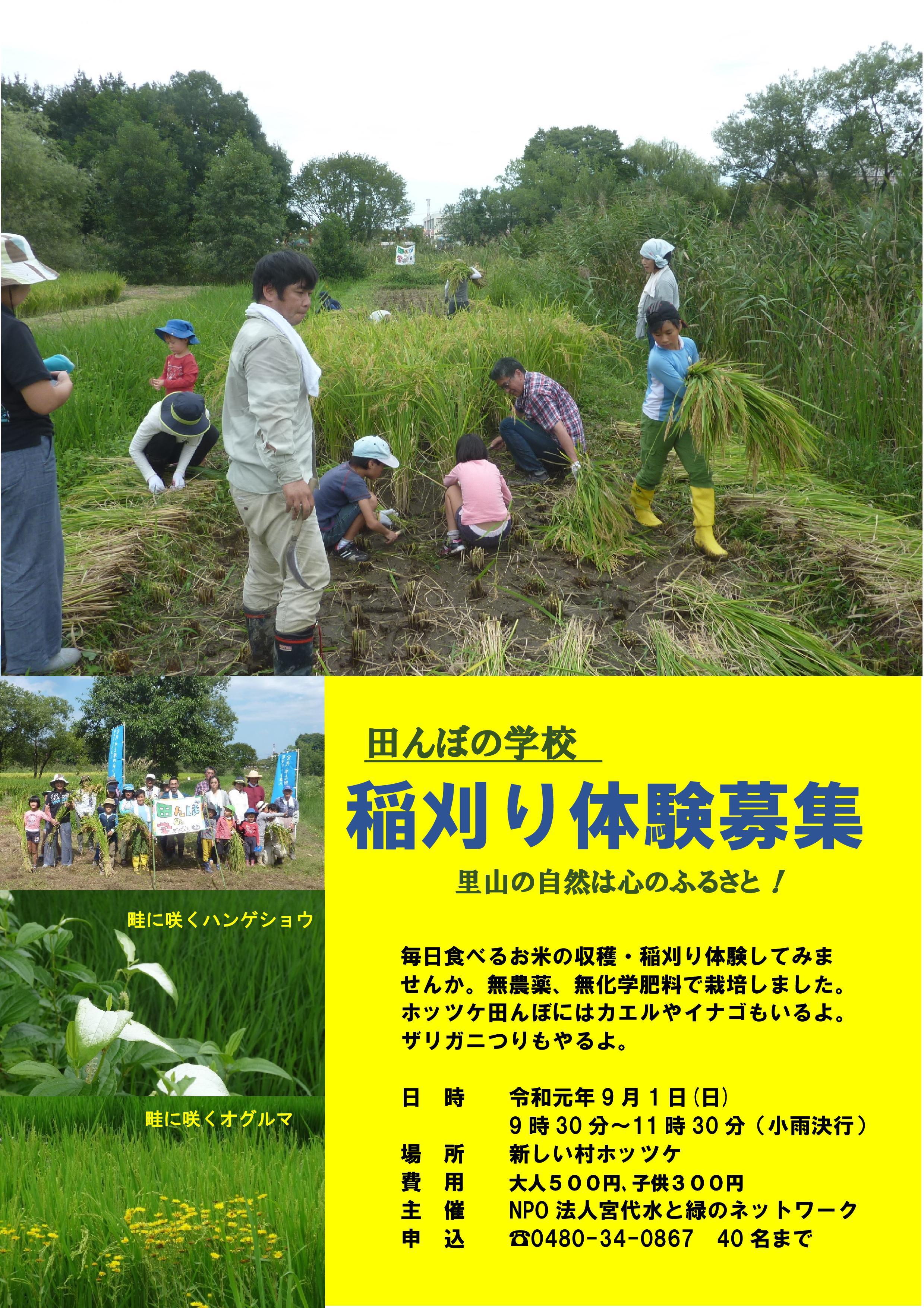 19稲刈り体験