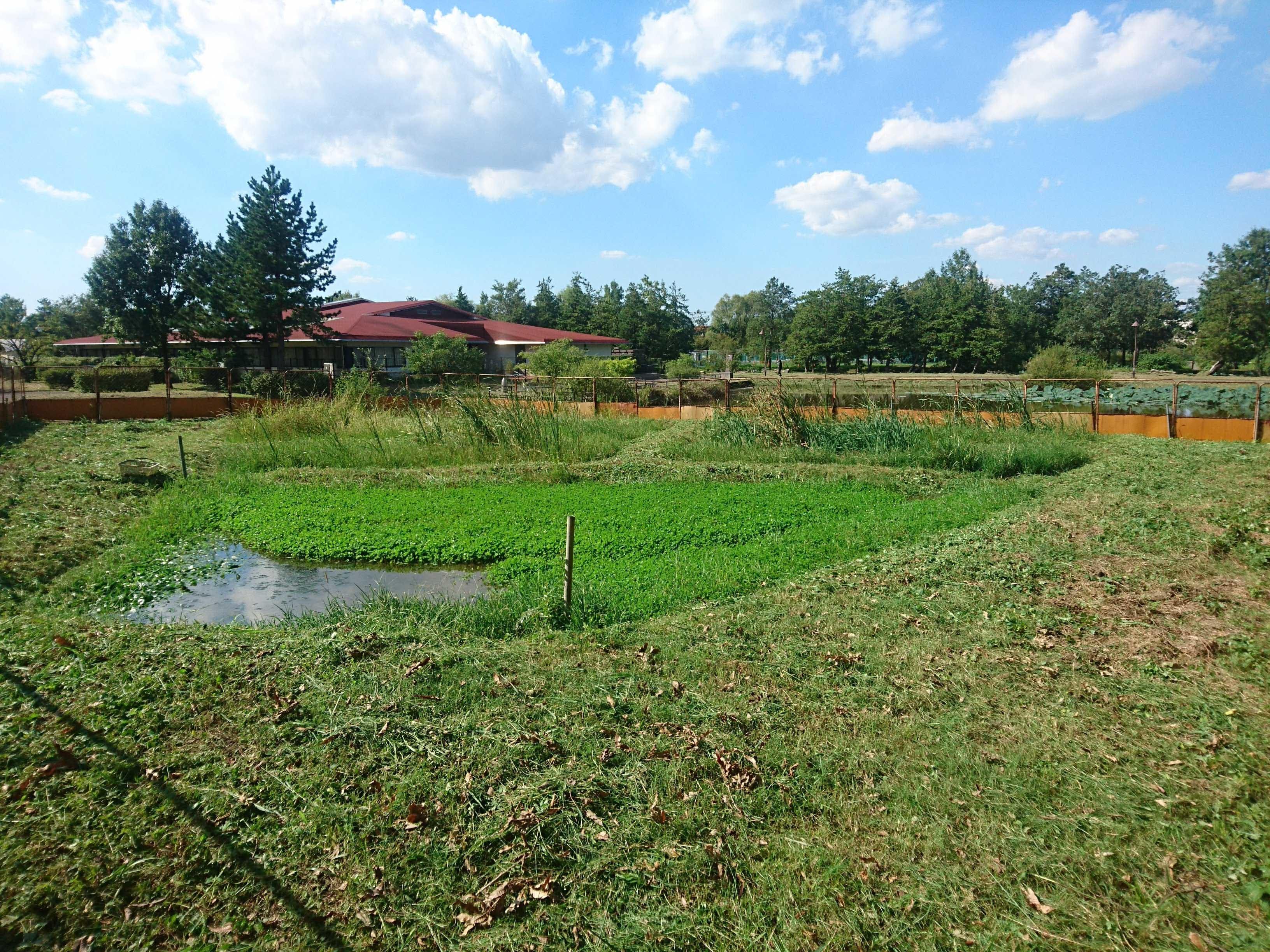 水質浄化エリア除草後