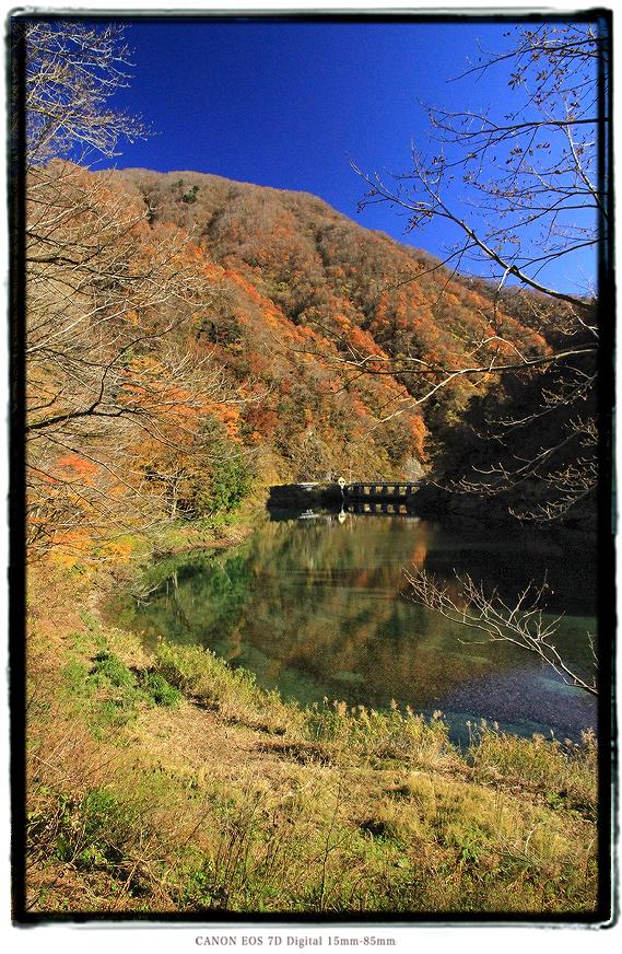 紅葉の神岳ダム1911gifudam01.jpg